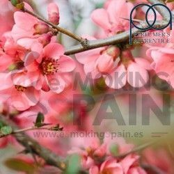 Cherry Blossom TPA 100ml