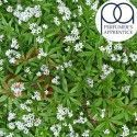 Sweet Woodruff TPA 10ml